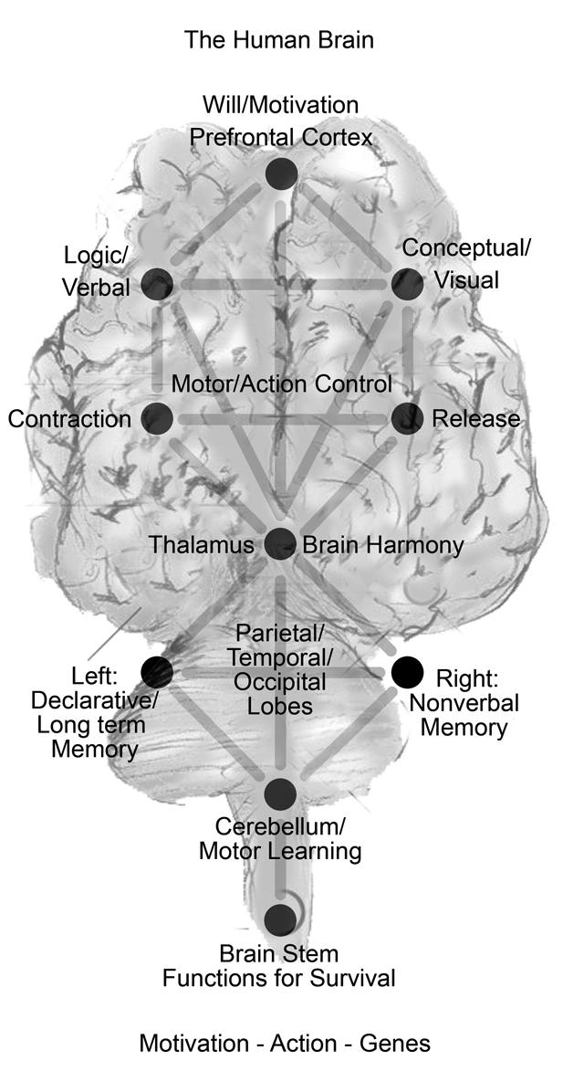 funciones del cerebro humano. del cerebro humano,