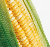 sweet corn image from www.tunbridgewells.gov.uk