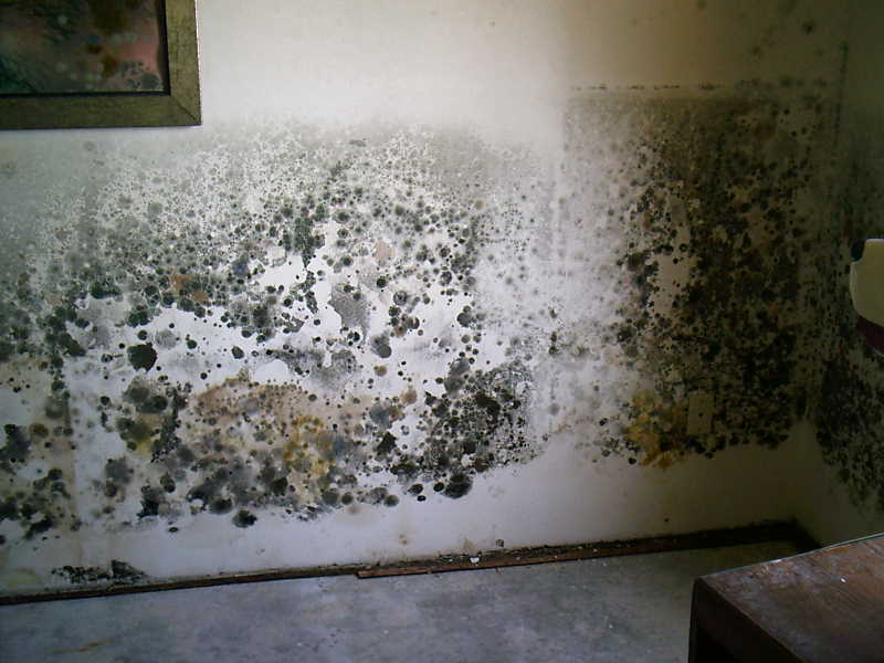 in the basement murray checked inside a crawlspace there was mold