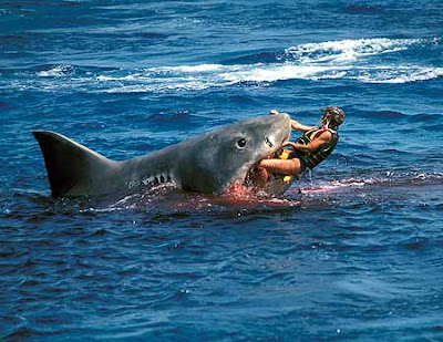 Tiger Shark Attacks
