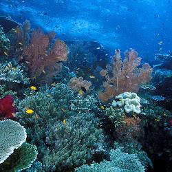 keindahan bawah laut indonesia