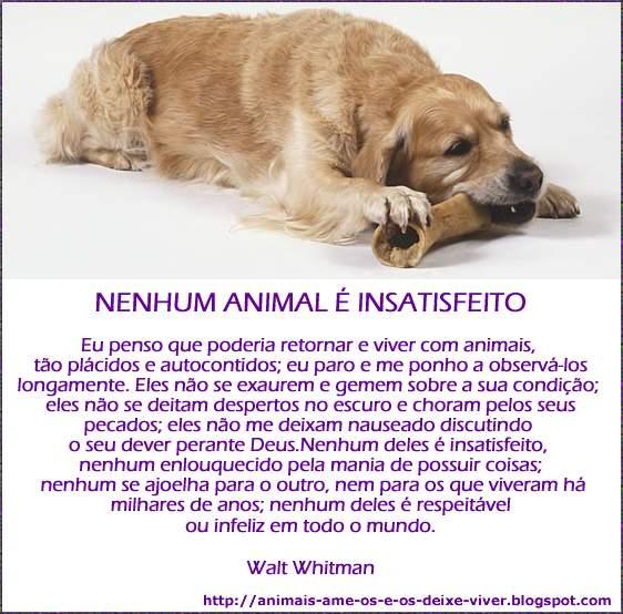 Animais Ame Os E Os Deixe Viver Frases Sobre Animais