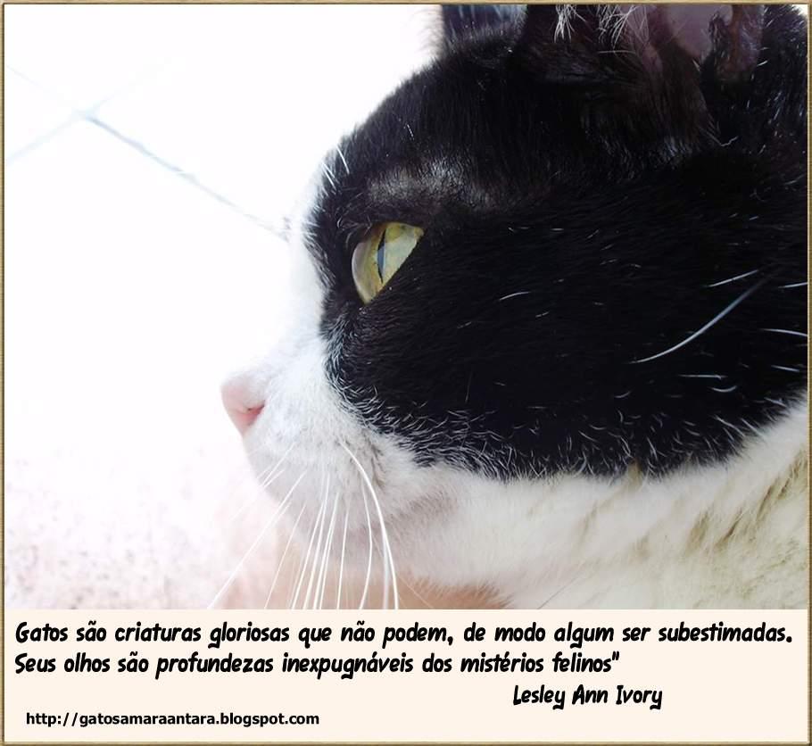 Tag Fotos De Gatos Fofos Com Frases