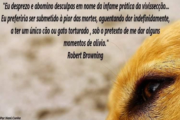 Animais Ame Os E Os Deixe Viver Frases Sobre Animais Para Refletir