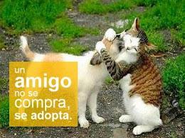 Adopta!
