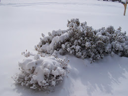 Snow Finally...