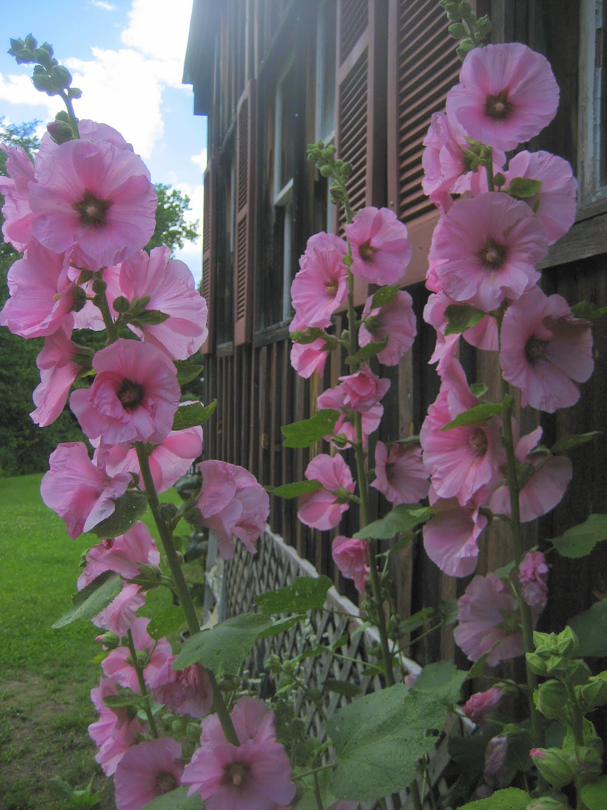 the sound of hollyhocks The theme of hugh garner's 'the sound of hollyhocks' concerns one of canada's most serious social problems the theme suggests how condescension and discrimination can have devastating effects on the people around us.