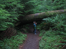 Cleaning Up the Forests - Canon Beach, OR