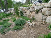 Great Wall of Annisquam Wall Garden