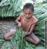 Child working on drug farm