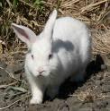 i love Rabbitz