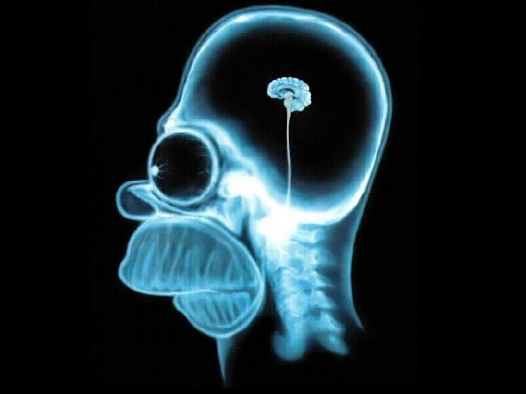 http://3.bp.blogspot.com/_qMV7JakUHno/TQK1ZrQI-oI/AAAAAAAAADI/pmVEvB5_8jE/s1600/homer-simpson-wallpaper-brain-1024.jpg