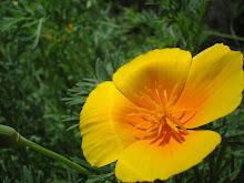 Il mio fiore preferito!
