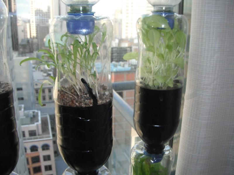 Urban green survival bottle garden workwithnaturefo