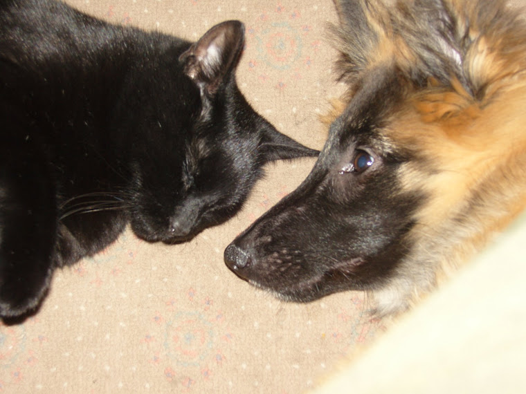 Best Mates ~ Indy and Tiva