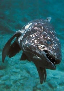 10 10 ikan prasejarah yang masih ada hingga sekarang