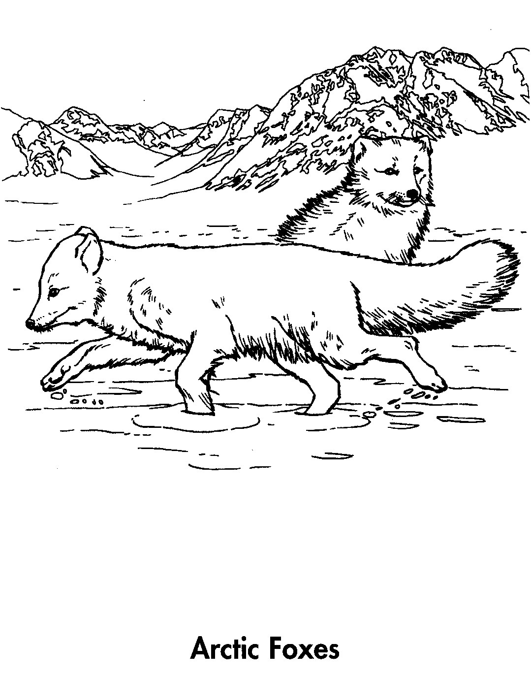 Sport Life Planet Earth Coloring Book Awesome Animals 95 Earth Arctic Coloring Page