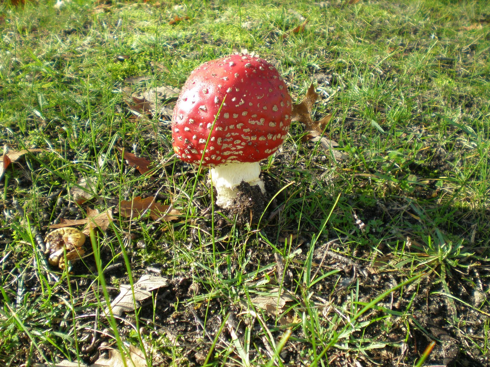 Everyday Play: The Fairies Have Landed