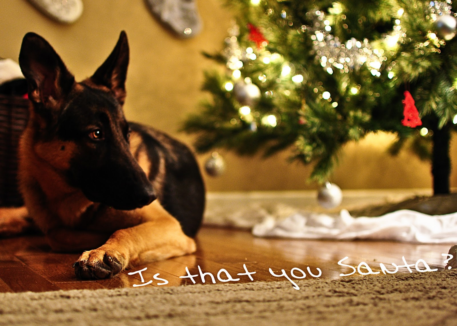 Dog Home Alone Chew And Lift Leg