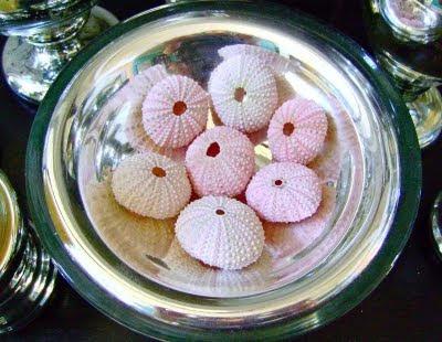 Pink Urchins