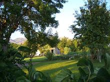 Our Garden/Yard