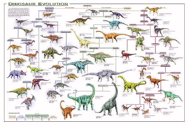 dinosaurs names and types pictures dinosaurs oviraptor facts all types ...