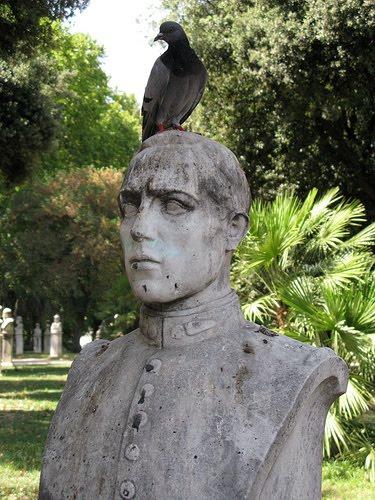 [pigeon+head]
