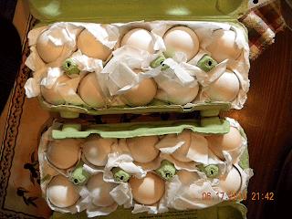 eggs in good shape