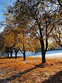 Gyldne blader