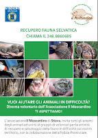 IL MOSCARDINO: recupero fauna selvatica