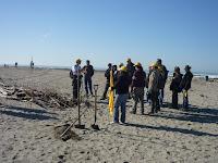 Costruzione fascine per consolidamento dune
