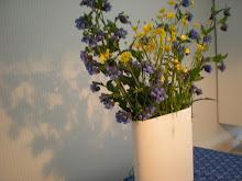 Gula och blå blommor
