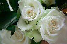 Vackra vita rosor till en grav