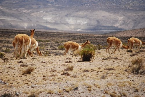 the pampas galeras national reserve also known as barbara d achille ...