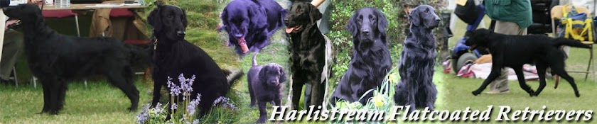 Harlistream