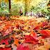 Meu querido Outono