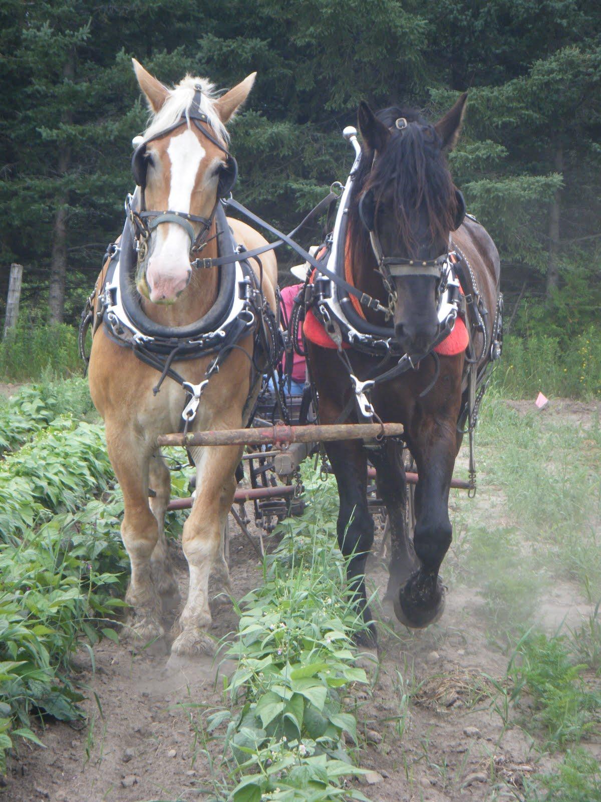 http://3.bp.blogspot.com/_q_NXSNbT0mI/TFDQtSV3DNI/AAAAAAAAAQg/qNzETTo_sbg/s1600/CRAFT+draft+horses+027.jpg