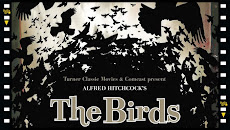 the_birds_film