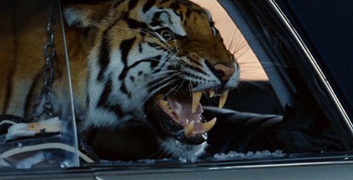 Ludic despair recent trends in vehicular cat humor for The hangover tiger in the bathroom