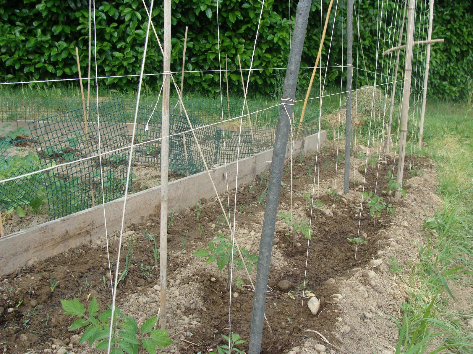 L 39 orto di terra situazione pomodori for Piantare pomodori