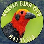 Borneo Bird Club: