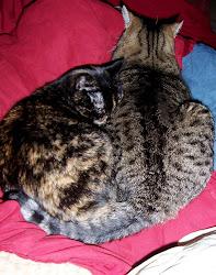Cat Naps ...