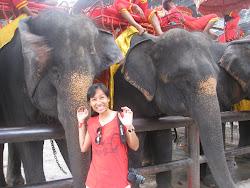 Ayutthaya Ele-fun-t