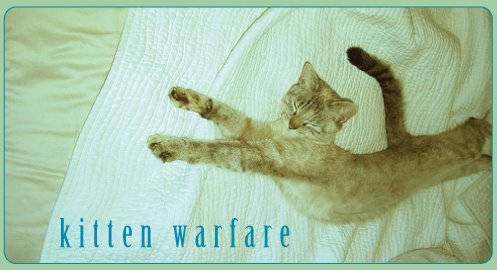 kitten warfare!