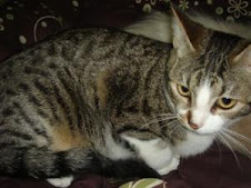 Siru, gatita de 8 meses sin hogar