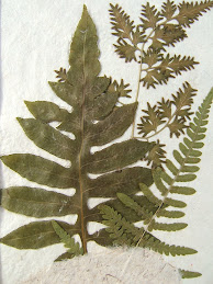 Three Ferns in Handmade paper