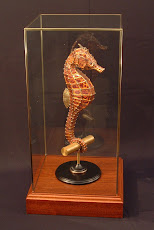 Sea Horse Under Glass