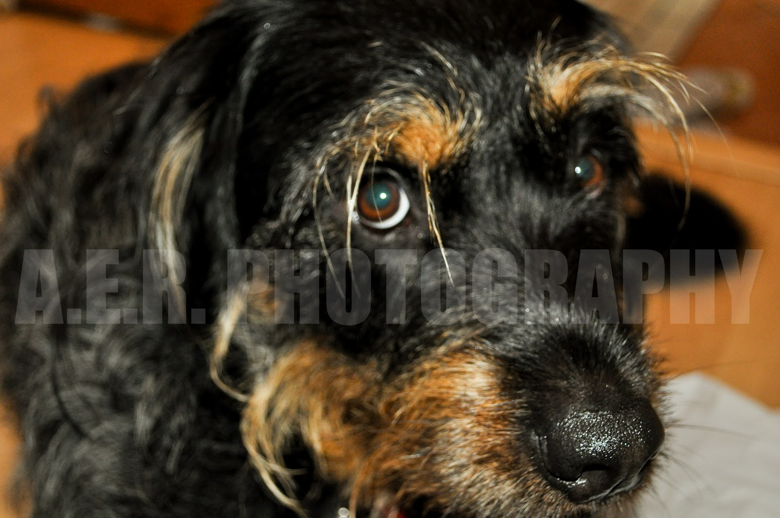 Minute Details Supposidly A Rottweiler