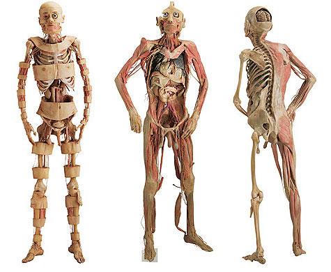 zma corpo e vida-3953