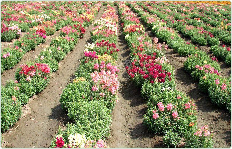 Flower gardening winter garden ideas for Winter garden designs ideas